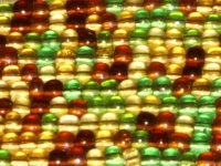 Earth Tones 8/0 Czech Seed Bead Mix